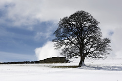 July 21, 2019 - Snowy Field And Tree (Credit Image: © John Short/Design Pics via ZUMA Wire)