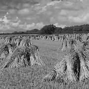 Field of Bales, Devon