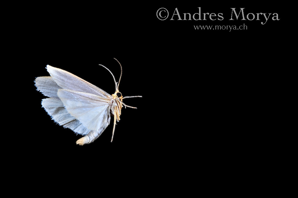 Insect in Flight, High Speed Photographic Technique Image by Andres Morya