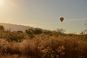 A hot air balloon flies over the Tanque Verde Creek on a December morning on the east side of Tucson, Sonoran Desert, Arizona, USA.