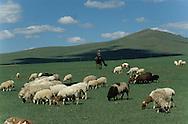 Mongolia. Cattle breeders in Manchir   / Éleveurs de moutons