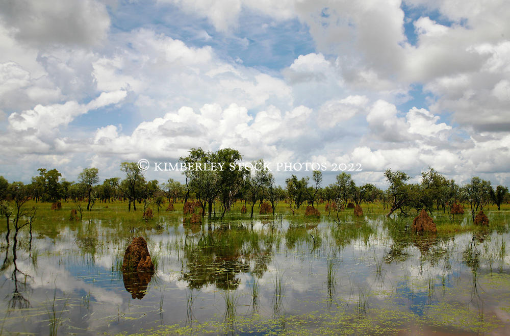 Termite mounds are reflected in water pooled after rains in the Kimberley wet season near Willare.