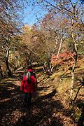 Georgia, Borjomi park, Autumn colors
