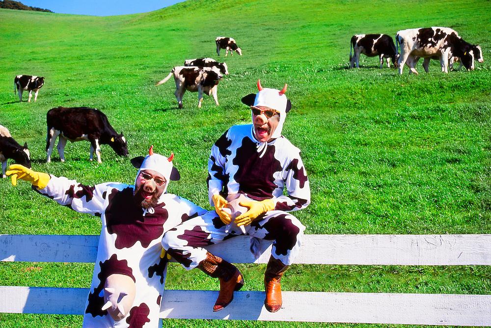 Hippie Hog Brothers on the farm