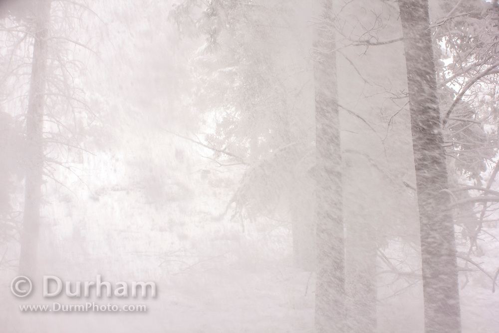 heavy snowfall captured by a motion sensing camera in Montana.