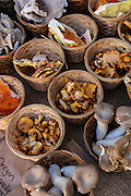 Locally grown mushrooms on display at the Farmers Market along Main Street in downtown Greenville, South Carolina.