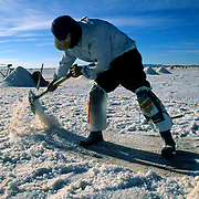 Lidio Ramos  is employed to diary at the salar since tape-worm ten years.  Salar de Uyuni ( Uyuni salt flat ) . Department  of Potos&iacute;  ( Los Lipez).  South West  Bolivia. <br /> Adult Altiplano America Andes Arid  Aridity Barren  Bicycle  Bolivia r Color Colour Cone  Day Daytime  Department  Desert Desolate Desolation Dry  Exterior Extraction  Geography Hack Hard  Heat Highlands  Horizon Horizontal Human  Latin America Lake  Los Lipez  Male Man Men Miner Mining Nature  Resource  Natural  One Outdoors Outside  Pan People  Person Pyramide Potos&iacute;  Production  Region Resource Rural Salar de Uyuni  Salt Flat  Salt Pan  Salt lake  Scenic Seasoning Shovel Single Shape South America  Southwest  Sud   Surface Travel  Truck West White Work  Worker Working
