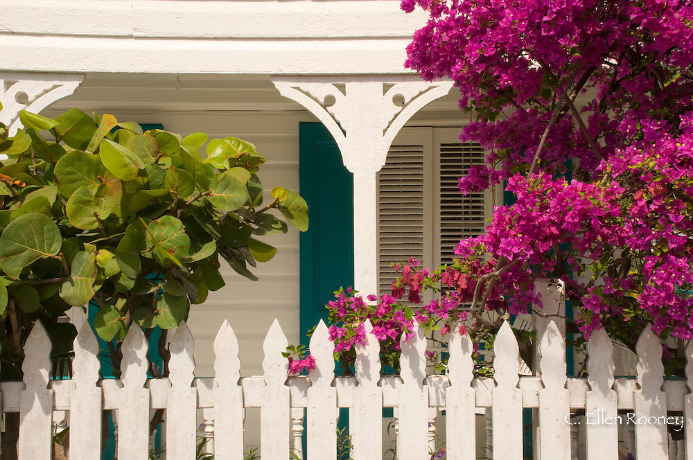 Bougainvillea growing above a white picket fence in front of a traditional clapboard cottage;  Dunmore Town, Harbour Island, The Bahamas