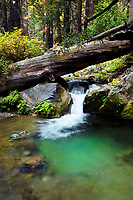I set up my high resolution camera to capture this vivid green photo of a lush green creek in Limekiln State Park.  This old growth redwood forest is a great setting for this small waterfall and bright green pool image.