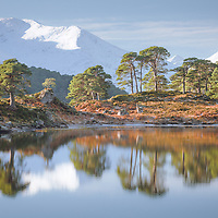 This was a wonderfully still pool of the loch with the slightest of texture from a cool breeze glancing over the surface. I was immediatley arrested by the symmetry of the trees relflected in its silvered surface. I liked the composition of three layers, the water's mirrored foreground, the dividing warmth of the sun-kissed treeline and the bright shoulders of mighty Mullach behind in his winter coat.