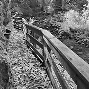 Sweet Creek Trail Scaffold Bridge - Mapleton, Oregon - Infrared Black & White