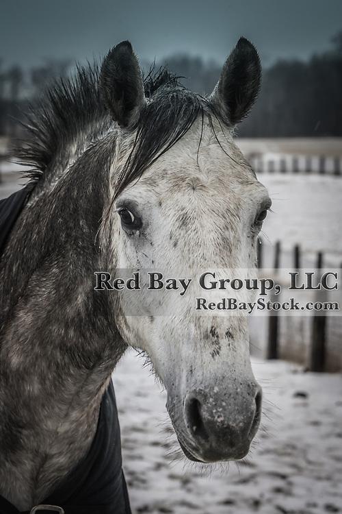 Grey horse head.