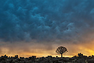 Africa, Southern, African, Namibia, Karas Region, Keetmanshoop,  Quiver Tree,