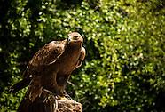 Sia Eagle Preserve