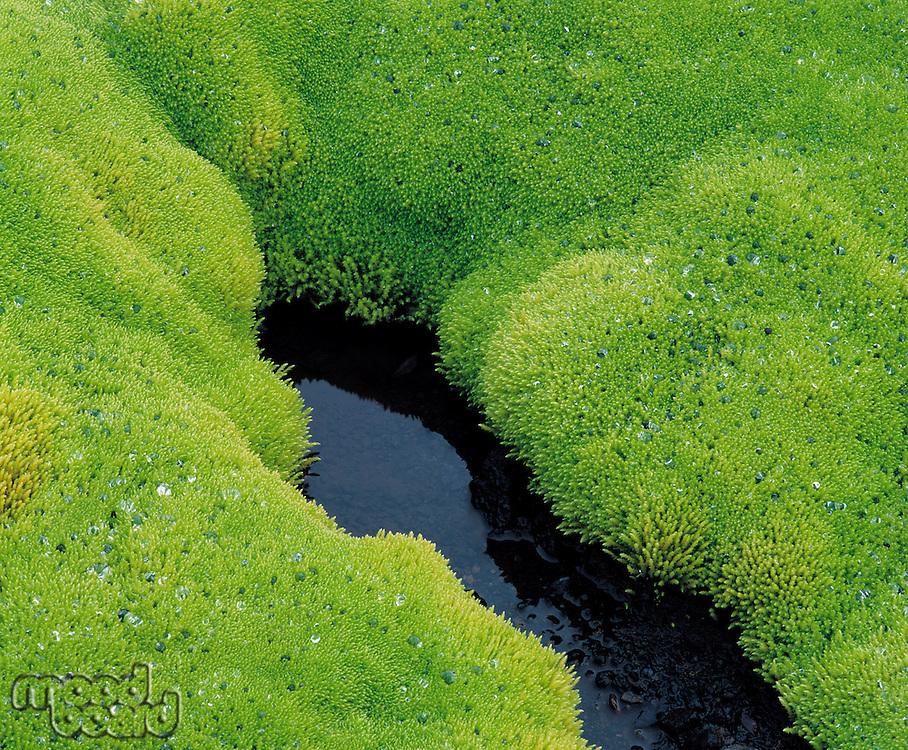 Lush moss and still water