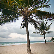 Palm trees line the beach in the Ocean Park neighborhood of San Juan, Puerto Rico at dusk.  In the distance, a couple sit near the ocean shore.