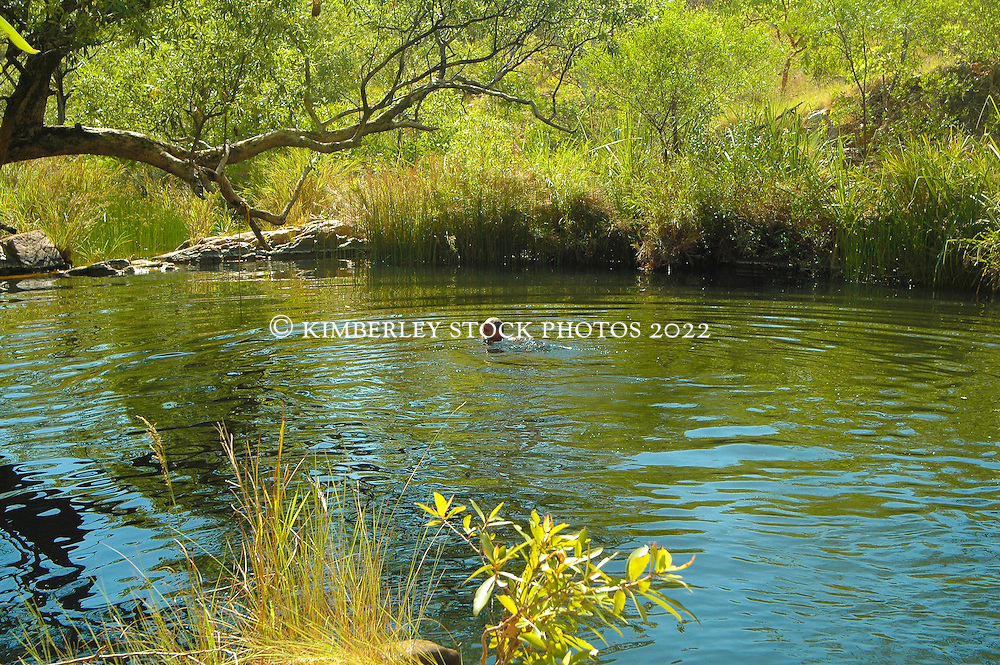 Lush vegetation surrounds a freshwater swimming hole on the Kimberley coast near the Traverse Island group.  Such freshwater pools are often safe for swimming.  The freshwater brings abundant birdlife.