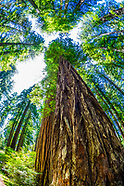 California-Redwoods National & State Parks