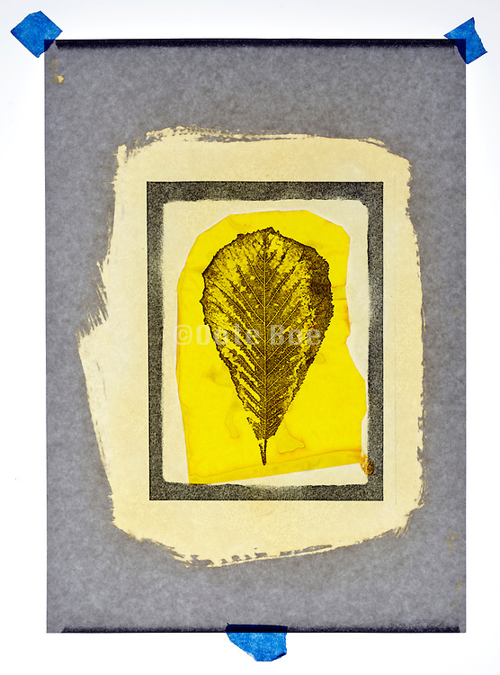 collage with leaf imprint