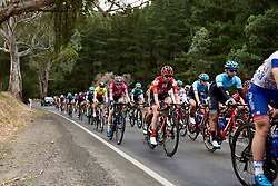 Pfeiffer Georgi (GBR) in the bunch on Stage 1 of 2020 Santos Women's Tour Down Under, a 116.3 km road race from Hahndorf to Macclesfield, Australia on January 16, 2020. Photo by Sean Robinson/velofocus.com