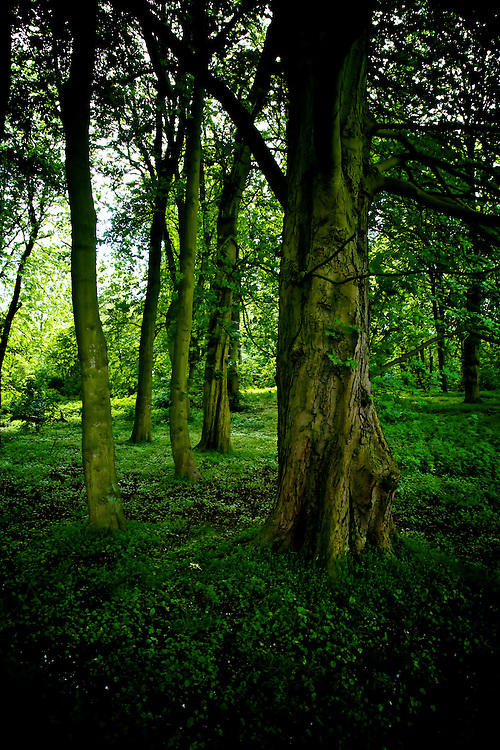 The Secret Wood 01<br />