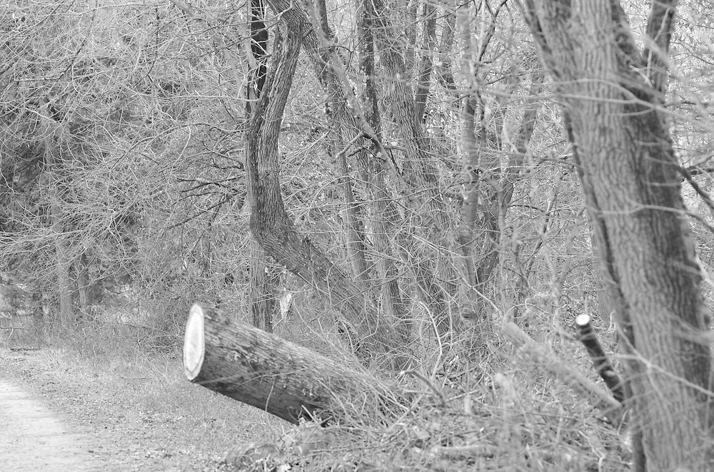 I was finishing a session on the D and R Canal in Hillsborough, NJ.  When I headed out, this scene just passed by.  The angle of the log relative to the  trees around it and the towpath work so well.