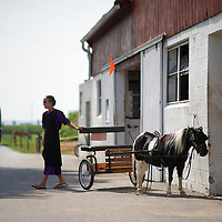 "A tour bus arrives at Riehl's Farm and Gift Shop while an Amish girl beckons her sister to their pony in Lancaster County, PA on August 9, 2014.  A bevy of Amish themed reality television shows (Amish Mafia, Breaking Amish, Return to Amish and Amish Haunting - to be televised soon) have prompted controversy over the negative portrayal.  One woman, a Mary Haverstick, a film maker, has launched a website in support of the Amish (respectamish.org) and has garnered the support of 3,000 businesses.  Her motivation to start the website was to ""end the bigoted programming.""  REUTERS/Mark Makela (UNITED STATES)"