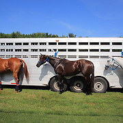 Competion horses tethered to a horse trailer during the Airstream vs. Cinque Terre Polo match at the Greenwich Polo Club, Greenwich, Connecticut, USA. 23rd June 2013. Photo Tim Clayton