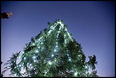 Dec 2012 Christmas Tree Trafalgar Sq