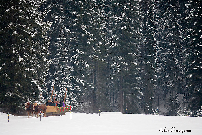 Guests ride horse drawn sleigh in winter at the Bar W Ranch near Whitefish Montana model released