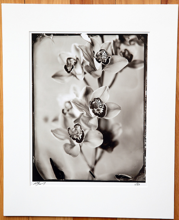 Wet plate Collodion, photography, portrait, tin type photo, Wet Plate Collodion New Zealand, prints for sale, limited edition
