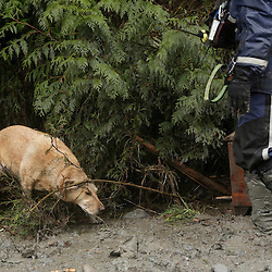 A dog is used as search work continues in the mud and debris from a massive landslide that struck Oso near Darrington, Washington March 29, 2014. The grim task of combing through debris from a landslide that sent a wall of mud cascading over dozens of homes on the outskirts of a rural Washington town came to a standstill briefly on Saturday for a moment of silence.The somber moment at 10:37 a.m. (1737 GMT) was observed exactly one week after the catastrophe, amid uncertainty over the fate of 90 people still listed as missing. On Friday, the unofficial body count rose to 27.  REUTERS/Jason Redmond (UNITED STATES)
