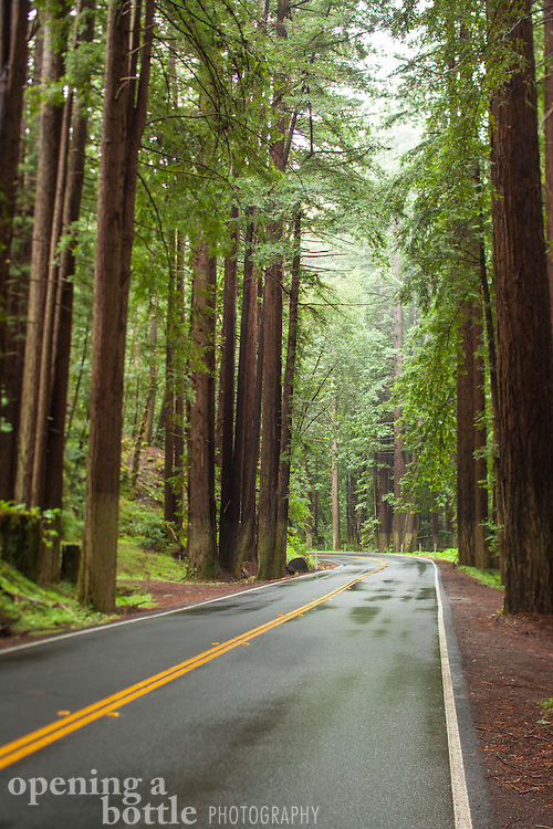 Redwoods along Highway 128 in Navarro River Redwoods State Park, Anderson Valley, Mendocino County, California.