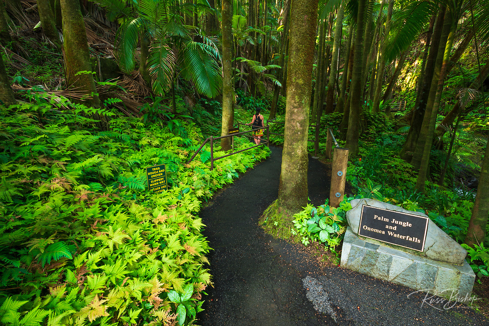 Palm Jungle trail at Hawaii Tropical Botanical Garden, Hamakua Coast, The Big Island, Hawaii USA