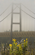© 2002 Randy Vanderveen, all rights reserved.Grande Prairie, Alberta.Wild flowers add a splash of colour as the Dunvegan Bridge is shrouded in fog.