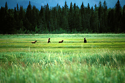 Alaska: Lake Clark Natl Park.  Bear Camp for grizzly bear viewing.  Photo akbear101..Photo copyright Lee Foster, 510/549-2202, lee@fostertravel.com, www.fostertravel.com