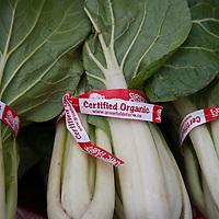 Organically grown bok choy at a farmers market.