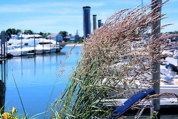Coastal Grass with Boats Docked in the Background, Hyannis, Cape Cod, Massachusetts
