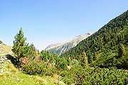 Austria, Zillertal High Alpine nature Park Hochgebirgs Naturpark near Ginzling, Tyrol