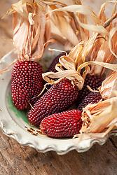 Ornamental strawberry popcorn. Zea mays