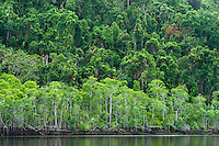 Thick rainforest leads to mangroves on the banks of the Hull River, far north Queensland.