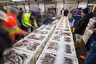 Peterhead wholesale fish market, Scotland