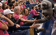 Women's basketball fans celebrate Breast Cancer Awareness and Gonzaga Day at the McCarthey Athletic Center as the Zags battled Portland. (Photo by Rajah Bose)