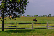 Horse Farm, Halsey Ln, Water Mill, Long Island, NY