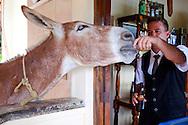 Donkey drinking beer at Villa Mirador de Mayabe, Holguin, Cuba.