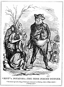 Rint' v. Potatoes - The Irish Jeremy Diddler. Daniel O'Connell (1775-1847) Irish political leader continued to collect repeal rents to fund Home Rule movement while Irish poor were starving. Cartoon from 'Punch', 15 November 1845. Wood engraving.