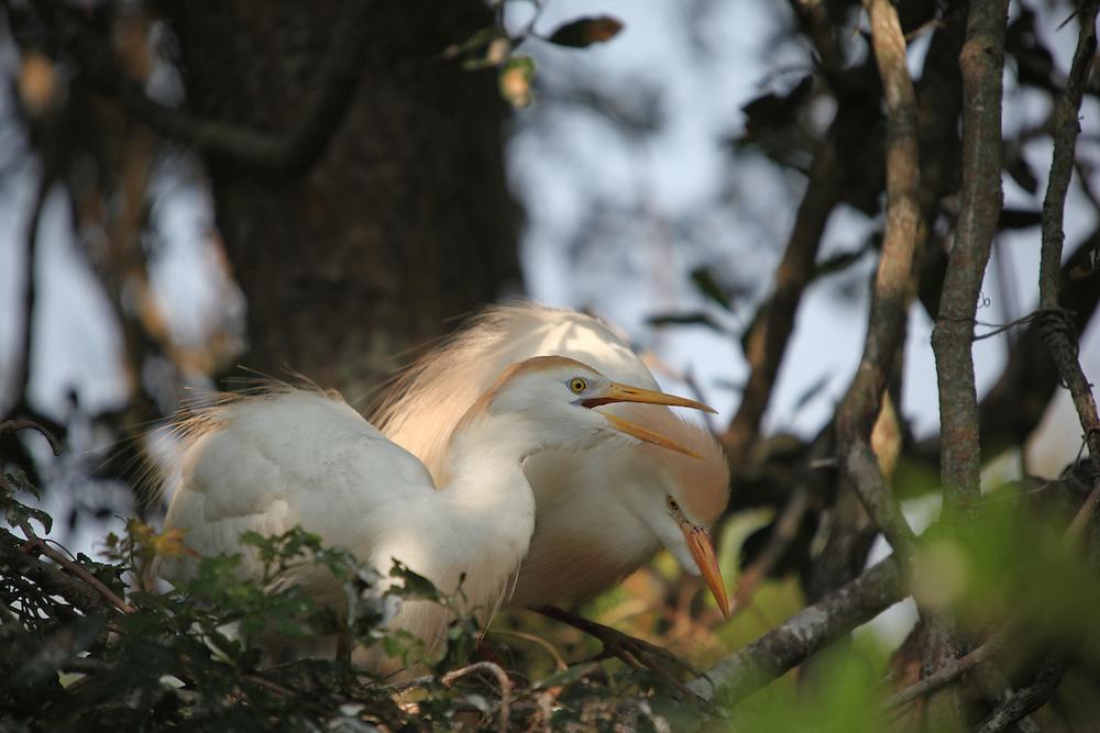 Nesting Birds and chicks