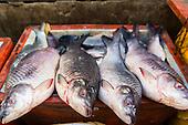 Yangon Fish Market