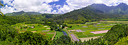Panoramic view of taro paddies in the Hanalei Valley, near Princeville, Kauai, Hawaii, US.