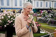 VANESSA REDGRAVE WITH THE NATASHA RICHARDSON ROSE, PRESS PREVIEW. The RHS Chelsea Flower Show 2011. The Royal Hospital grounds. Chelsea. London. 23 May 2011. <br /> <br />  , -DO NOT ARCHIVE-© Copyright Photograph by Dafydd Jones. 248 Clapham Rd. London SW9 0PZ. Tel 0207 820 0771. www.dafjones.com.